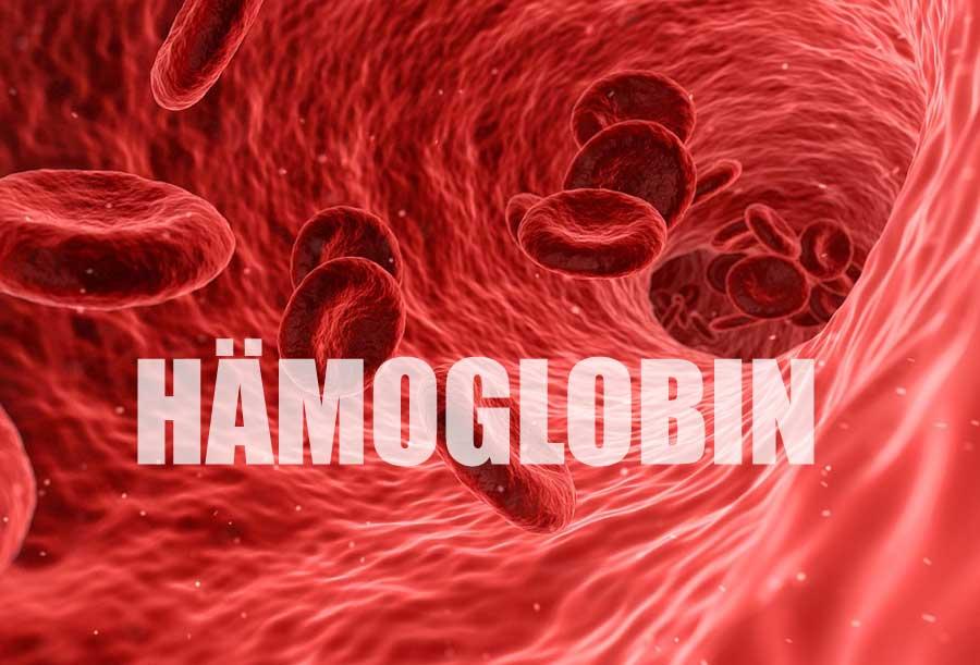 Hämoglobin ist ein eisenhaltiger Blutfarbstoff